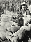 Chinese Pig Farm, Shanghai, 1959 Photographic Print by  Chinese Photographer