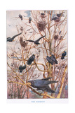 The Rookery, Illustration from 'Country Ways and Country Days' Giclee Print by Louis Fairfax Muckley