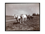 Ploughing on the Property of Alton Brooks Parker, Esopus Creek, New York, 1904 Giclee Print by  Byron Company