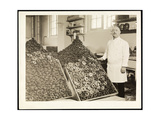 Portrait of Chef Leoni with Bins of Doughnuts for the Salvation Army at the Hotel Commodore, 1919 Giclee Print by  Byron Company