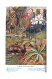 Carnivorous Plants, Illustration from 'Wonders of the Land and Sea', Publis Giclee Print by Theobald Carreras