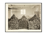 Bins of Doughnuts for the Salvation Army at the Hotel Commodore, 1919 Giclee Print by  Byron Company