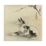 Black and White Dog, 1910 Giclee Print by Ogata Gekko