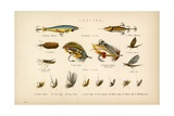 Angling Giclee Print by  English School