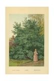 Laurel Giclee Print by William Henry James Boot