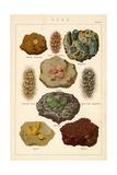Gems Giclee Print by  English School