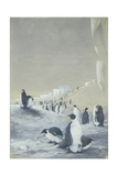 Emperor Penguin at Cape Crozier, Mar 28, 1911 Giclee Print by Edward Adrian Wilson