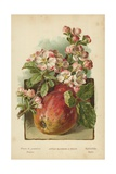 Apple Blossom and Fruit Giclee Print by William Henry James Boot