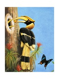 The Hornbill Giclee Print by R.B. Davis