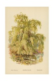 Weeping Willow Giclee Print by William Henry James Boot