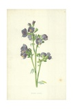 Jacob's Ladder Giclee Print by Frederick Edward Hulme