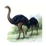 Pre-Historic Birds Giclee Print by David Nockels