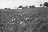 Corpse of a German Soldier after the Battle of the Marne, 1914 Photographic Print by Jacques Moreau