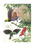 Birds of Paradise Giclee Print by  English School