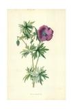 Wild Geranium Giclee Print by Frederick Edward Hulme