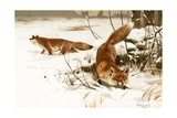 Common Fox Giclee Print by Wilhelm Kuhnert