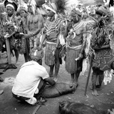Asaro Tribespeople Performing a Ritual Exchange of Pigs and Display of Weal Photographic Print