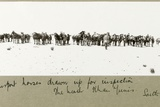 N.Z.M.F.A. Transport Horses Drawn Up for Inspection on the Beach, Khan Yunis, September 1917 Giclee Print by Capt. Arthur Rhodes