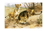 Lion and Lioness Giclee Print by Wilhelm Kuhnert