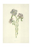 Common Flax Giclee Print by Frederick Edward Hulme