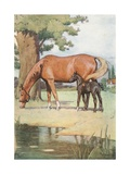 The First Place That I Can Well Remember, Was a Large Pleasant Meadow with a Pond of Clear Water… Giclee Print by Cecil Charles Windsor Aldin