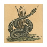 Snake Giclee Print by  English School