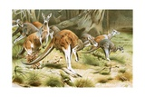 The Red Kangaroo Giclee Print by Wilhelm Kuhnert