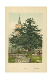 Yew Giclee Print by William Henry James Boot