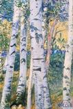 Carl Larsson - Birch Trees, 1910 Digitálně vytištěná reprodukce