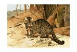 Wild Cat Giclee Print by Wilhelm Kuhnert