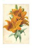 Orange Lily Giclee Print by Frederick Edward Hulme
