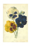 Pansies Giclee Print by Frederick Edward Hulme
