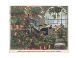 Falling Through the Conservatory Roof Giclee Print by  English School