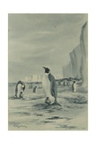 An Emperor Penguin Rookery, c.1901-04 Giclee Print by Edward Adrian Wilson