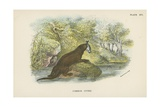 Common Otter Giclee Print by  English School