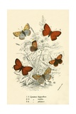 Butterflies Giclee Print by  English School