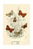 Butterflies Giclee Print by  English School