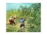 Cutting Sugar Cane in Argentina Giclee Print by Ferdinando Tacconi