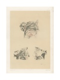 The Head and Neck. Nose Cavity with the Boundaries and Openings into It Giclee Print by G. H. Ford