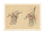 The Upper Limb. Superficial and Deep Views of the Palm of the Hand Giclee Print by G. H. Ford