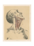 The Head and Neck. View of the Front of the Neck after Displacement of the Sterno-Mastoideus Giclee Print by G. H. Ford