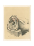 The Head and Neck. Sinuses of the Dura Mater, and Two Deep Views of the Orbit Giclee Print by G. H. Ford