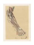 The Upper Limb. Deep View of the Back of the Forearm Giclee Print by G. H. Ford