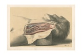 The Head and Neck. The Anatomy of the Side of the Neck Behind the Sterno-Mastoid Muscle Giclee Print by G. H. Ford