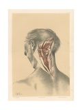 The Head and Neck. A Deep View of the Back of the Neck Giclee Print by G. H. Ford