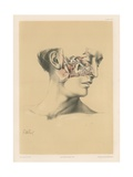 The Head and Neck. Upper Maxillary Nerve, and Deep Part of the Internal Maxillary Artery Giclee Print by G. H. Ford