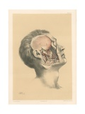 The Head and Neck. Superficial View of the Pterygoid Region Giclee Print by G. H. Ford