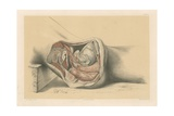 The Pelvis. Side View of the Viscera, of the Female Pelvis Giclee Print by G. H. Ford