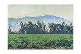 The Sierra Nevada Mountains Giclee Print by Gunnar Widforss
