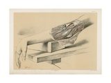 The Upper Limb. Superficial Veins and Nerves in Front of the Bend of the Elbow Giclee Print by G. H. Ford
